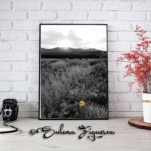 8 originals Flowers and Cactus Series by Sulema